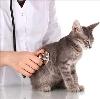 Ветеринарные клиники в Нестерове